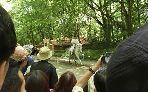 blog45葵祭.jpg