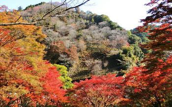 blog51吉野山.jpg
