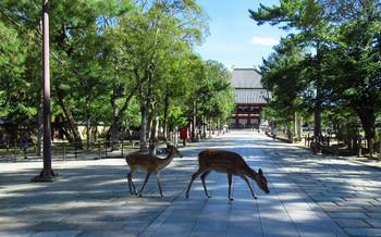 blog61東大寺.jpg