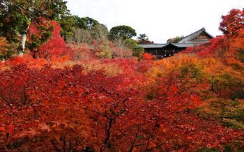 blog62東福寺.jpg