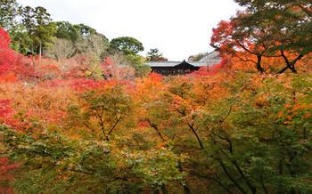 blog63東福寺.jpg