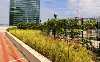 blog92天空の農園.jpg